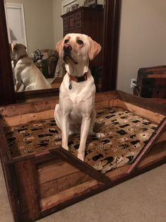 A DIY dog bed pallet made can be a cheap and easy way to give your pet some comfort, so pay attention to the ideas we are about to present to you and get ready to buy some pallets and make a custom dog bed. Rustic Dog Beds, Pallet Dog Beds, Dog Beds For Small Dogs, Cool Dog Beds, Wooden Bed Base, Dog Organization, Organizing Tools, Wood Pallet Recycling, Diy Pallet