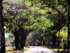 Pista de caminhada - Bosque dos Eucaliptos