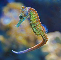 Un bonito y colorido habitante del mundo submarino de Islas Canarias
