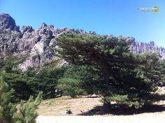 Cosa vedere in #Corsica: l'#entroterra tra Corte e Zonza | Viaggio nel Mondo