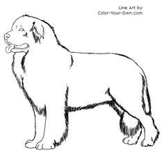 Newfoundland Dog Line Art