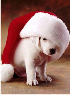 This adorable photo of a puppy wearing a hat way too big for him is beautiful.