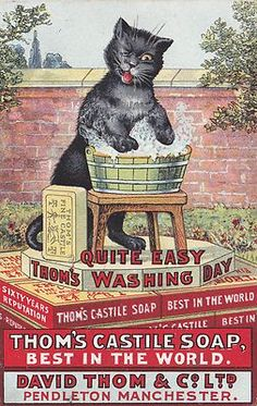 ADVERTISING BELIEVED TO BE A LOUIS WAIN UNSIGNED POSTCARD WASHBUCKET POSTCARD THOM'S CASTILE SOAP