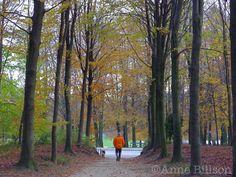 Oranje jas: Ter Kamerenbos, Brussel.