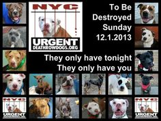 TO BE DESTROYED - SUNDAY - 12/01/13 - Urgent Part 2 - Urgent Death Row Dogs