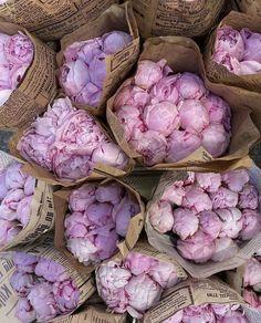 Peony Flower, My Flower, Kids Brand, Flower Aesthetic, Pink Peonies, Planting Flowers, Floral Arrangements, Beautiful Flowers, Exotic Flowers
