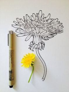 Flowers in Progress by Scientific Illustrator Noel Badges Pugh. Scientific illustrator and artist Noel Badges Pugh has an incredible knack for drawing Art And Illustration, Arte Sketchbook, Ink Drawings, Pen Art, Botanical Art, Art Tutorials, Painting Tutorials, Painting & Drawing, Drawing Drawing