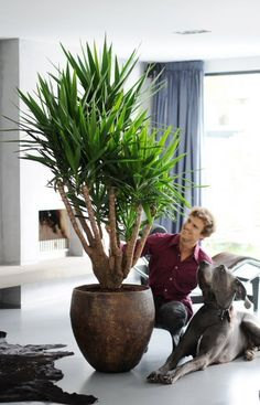 Make a statement with a bold planter for your Yucca #plant