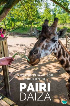 5 Reasons Why You Should Visit Pairi Daiza - A paradise in the heart of Belgium, with more than 4500 animals!