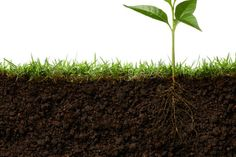 2015 Is the International Year of Soils //  The UN declares that dirt is one of our most important resources.  - The United Nations has declared that 2015 is the International Year of Soils, and we couldn't agree more. After the groundbreaking (pun intended) discovery that * soil can sequester carbon out of the atmosphere, essentially reversing climate change *, we're not surprised that dirt is finally getting its due.