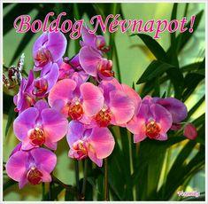 Name Day, Pretty Flowers, Happy Birthday, Names, Plants, Happy Brithday, Beautiful Flowers, Saint Name Day, Urari La Multi Ani