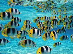 Curacao onder water