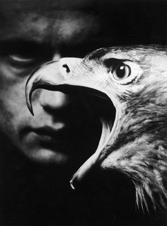 Great composition, focus, and light | birds | bird | dark | darkness | fierce | brilliant black & white photography | squark | spooky | www.republicofyou.com.au
