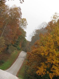 Ride my motorcycle on this road....Through The Woods- Tennessee Autumn  I want to find a man who will take me with him on his motorcycle down this road and lots of others!!!!! ST