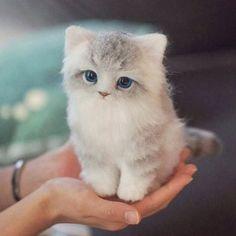Needle felted kitten. 밤비와 쌍벽을 이루는 나의 로망.