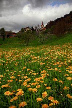 bluepueblo:  Dandelion Field, Slovenia photo via wandering