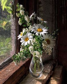 Almost a painting, daisies by the gentle window - Blumen