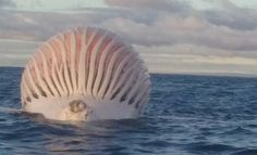 It looks out of this world, but officials have identified it as the carcass of a common sea creature.