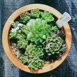 Not all succulents are happy houseplants. Here are 10 that can survive the often-challenging conditions of indoor living