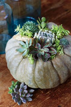 Succulent Vase - No-Carve Pumpkin Decorating Ideas - Southernliving. For this all-natural look, SL craft guru Buffy Hargett Miller started with a gray-green pumpkin. Pick one with an indented top, because the first step will be to add potting soil to fill in the hollow around the pumpkin's stem. Moisten the soil