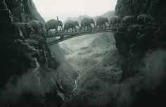 Elephants - Thomas  Herbrich