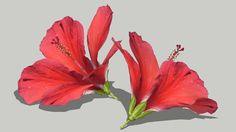 Large preview of 3D Model of Hibiscus Flower