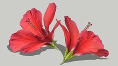 Hibiscus Flower - 3D Warehouse