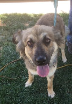 Rita Hayworth is an adoptable keeshond searching for a forever family near Newport Beach, CA. Use Petfinder to find adoptable pets in your area.