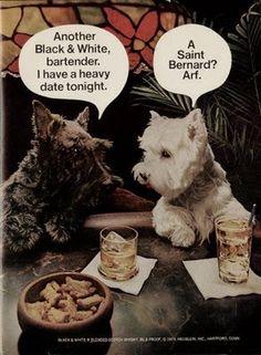 "Scottie~""Another Black and White scotch, Bartender. I have a heavy date tonight."" Westie~""A St. Bernard? Arf!"" El mundo del Westie (Westie World). #elmundodelwestie"
