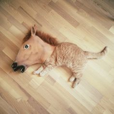 Creepy Horse Mask is an Internet culture sensation that sounds exactly like it is: a creepy horse mask used in a variety of, usually hilarious, scenarios. 10 Awesomest Photos of Pets Wearing A Creepy Horse Mask I Love Cats, Cute Cats, Funny Cats, Funny Animals, Cute Animals, Silly Cats, Funny Humor, Horse Hay, Horses
