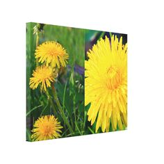 Dandelions Collage Gallery Wrapped Canvas Print by KJacksonPhotography -- Taken 05.15.2014 Dandelion is a flowering herbaceous perennial plant of the family Asteraceae. It can be found growing in temperate regions of the world, in lawns, on roadsides, on disturbed banks and shores of water ways, and other areas with moist soils. #nature, #maine, #flowers, #dandelions