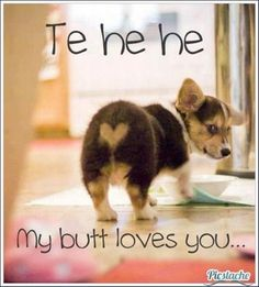 funny-dog-butt-loves-you.jpg 620×686 pixels