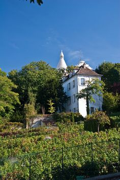 Clos de Montmartre vineyard, Paris, France ~ only vineyard still within the city limits ~ all wine produced is auctioned for charity at the annual autumn Fête des Vendanges (Montmartre Harvest Festival).