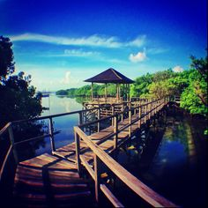 The Mangrove Forest in Bali Mangrove Forest, Denpasar, Future Travel, Walkway, Ecology, Garden Bridge, Bali, Outdoor Structures, Architecture