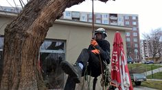 Orezať správne strom nie je žiadne adrenalínové dobrodružstvo