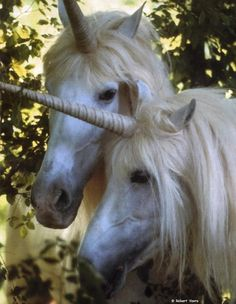 The popular image of the unicorn is that of a white horse differing only in the horn. Description from pinterest.com. I searched for this on bing.com/images