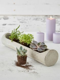 Concrete Planter Centrepiece #nordichouse #concrete #planter