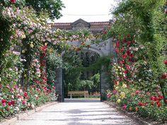 La Roseraie ©Ville d'Epinal.France.  La Roseraie de la Maison Romaine compte plus de 5000 variétés de roses.
