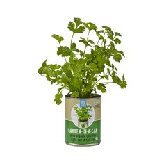 Ready to grow cans make it fun and easy to harvest organic herbs right from your windowsill—just plant, water & grow!