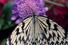 a butterfly snacking.