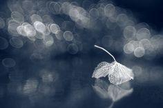 Photography by Shihya Kowatari
