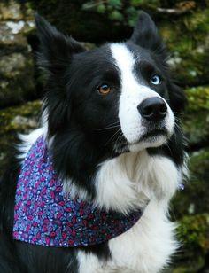 Skye Blue modelling the 'Navy Blue Paisley Dude' bandana by Dudiedog Bandanas.