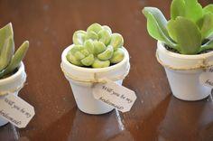 150 Small Succulent Wedding Baby Shower by StellaDesignsShop
