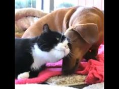 Abandoned Dog Bonds with Paralyzed Cat - LOVE