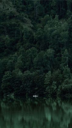 expressions-of-nature - Posts tagged forest Dark Green Aesthetic, Nature Aesthetic, Aesthetic Colors, Aesthetic Pictures, Fishing Photography, Nature Photography, Portrait Photography, Children Photography, Nature Verte