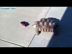 웃긴 동물 영상 베스트 모음 ㅋㅋㅋ   YouTube 720p