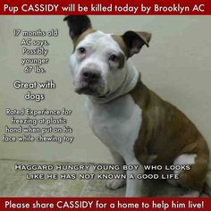 On Kill List - NY - Please support Your Shelter Animals By Fosterinig and Helping to Adoption