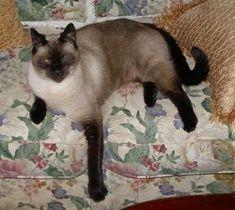 Homemade Cat Deterrent Tips  Natural Cat Deterrent Methods as Well as Commerical Solutions - Ten in All
