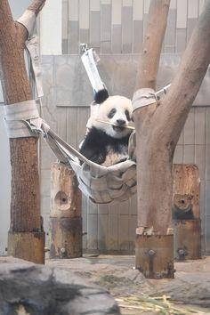 今日のパンダ(2192日目) | 毎日パンダ
