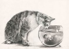 Posts about parchment written by biancaferrando Living Treasures, Pencil Shading, Cat Drawing, Abandoned, Deviantart, Cats, Drawings, Portraits, Fish